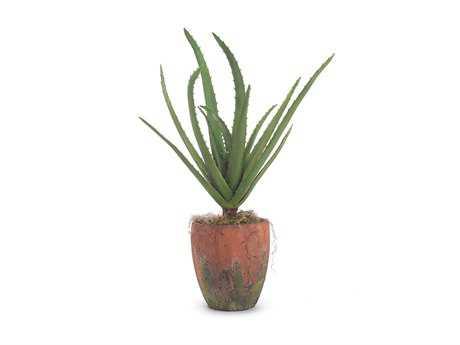 John Richard Natural Aloe Floral Arrangement