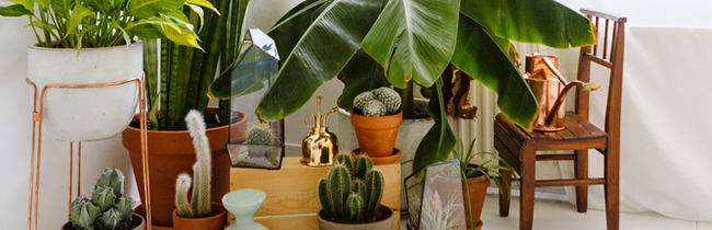 Learn to flaunt your green thumb, indoors. House plants enliven a room instantly.