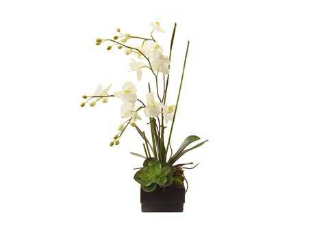 John Richard Phalaenopsis Orchid Floral Arrangement in Vase