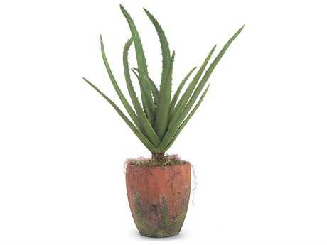 John Richard Natural Aloe Floral Arrangement
