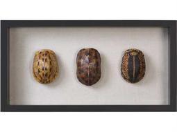 Uttermost Jim Parsons Tortoise Shells Shadow Box