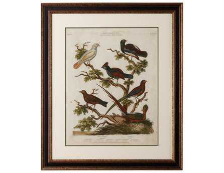 Chelsea House Black With Accents Frame Ornithology II CH386484