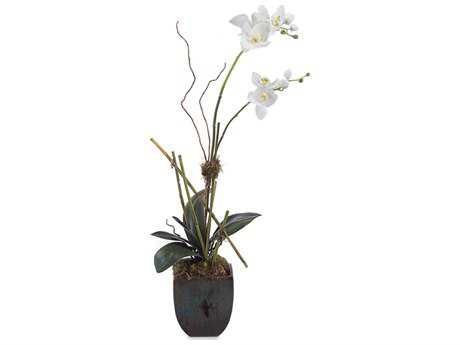 John Richard Organic Orchid Floral Arrangement  (Four-Piece Set) JRJRB2659