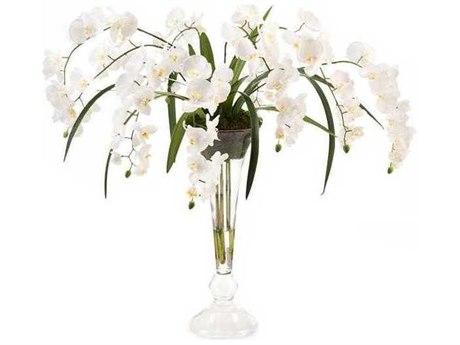 John Richard Natural Phalaenopsis Floral Arrangement JRJRB3900W