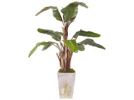 John Richard Trees Botanical