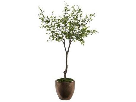 John Richard Trees Botanical JRJRB3972