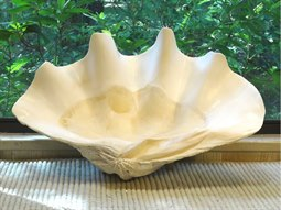 White  Giant Clam Sculpture